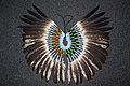 Bald eagle feather bustle (23947361528).jpg