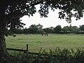 Balk Lane, Arnold - geograph.org.uk - 907950.jpg