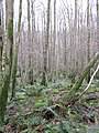 Balloch Wood - geograph.org.uk - 313128.jpg