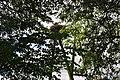 Baltā stārķa ligzda Nr.1524, Suntažu pagasts, Ogres novads, Latvia - panoramio (1).jpg