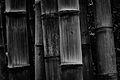 Bamboo (Imagicity 1201).jpg