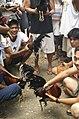 Barangay-Bulacao Cebu-City Philippines Cockfighting-event-03.jpg