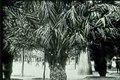File:Barcelone et son parc (1911).ogv