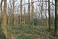 Barnet Gate Wood - geograph.org.uk - 2360817.jpg