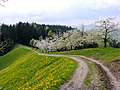 Bauma, Switzerland - panoramio - Markus Plüss (1).jpg