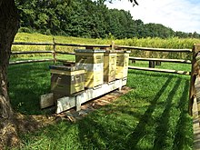Beehives beside a field