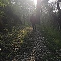 Beauty of light passing through the woods on a monsoon morning.jpg