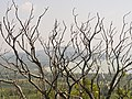 Becehegy - panoramio.jpg