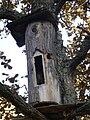 Bee-tree Kaloda 6.JPG