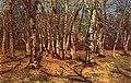 Beechforest.jpg