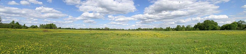 Belarus-Vitsebsk Province-Field