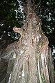 Beng Mealea ប្រាសាទបឹងមាលា ベンメリア DSCF4701.jpg