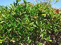 Bermuda (UK) image number 247 foliage.jpg