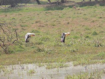 BharatpurBirdSanctuary001.jpg