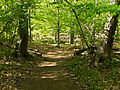 Billy Goat B Trail 7.jpg