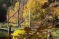 Biotop im Haldenbachtal - panoramio.jpg