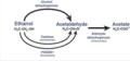 Biotransformation pathway of ethanol (NIH NIAAA, 2007).png