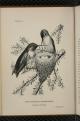 Birdcraft-0038.png