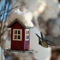 Birdie bird fly fly (8261151877).jpg