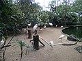Birds in Zoo Negara Malaysia (13).jpg