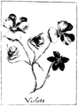 Black and White Violets.png