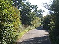 Bobbits Lane between hedges and trees - geograph.org.uk - 1001556.jpg