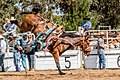 Boddington Rodeo 2015 (128247975).jpeg