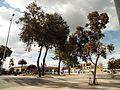 Bogotá árboles en la plaza España.JPG
