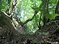 Bois de Saint-Guignefort 2.jpg