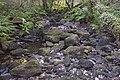 Bosque - Bertamirans - Rio Sar - 045.jpg