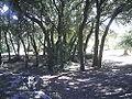Bosque de La Bañizuela.jpg