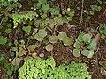 illustrated handbook of succulent plants crassulaceae secon-hand