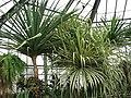 Botanic garden - Cluj-Napoca (2288987782).jpg