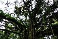 Botanic garden limbe134.jpg
