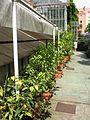 Botanische tuin - Sofia (4760133176).jpg