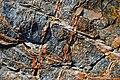 Boxwork veining in metatuffs (Cranberry Island Series, Upper Silurian, 424 Ma; Seawall Beach, Mt. Desert Island, Maine, USA) 1.jpg