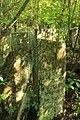 Briceni Jewish Cemetery 7.JPG