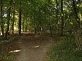 Bridleway through Greatbottom Wood - geograph.org.uk - 558009.jpg