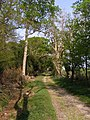 Bridleway to Dilton Farm from Roydon Woods - geograph.org.uk - 430644.jpg