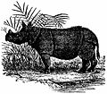Britannica Javan Rhinoceros.jpg