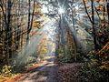 Bruderwald-Herbstsonne-026317.jpg