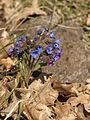 Brzke jaro - detansky chlum - prirodni rezervace - 03.jpg