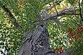 Buche im Herbst auf dem Rochlitzer Berg - Geopark Porphyrland - Sachsen.jpg