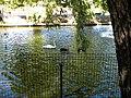 Bucuresti, Romania, Parcul Herastrau (Imagine de pe lacul Herastrau)(Lacul Lebedelor, 1); B-II-a-A-18802.JPG