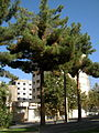 Buildings and tree - Takhti st - Nishapur 1.JPG