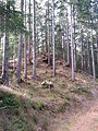 Burg Klingenstein, Hügel 1.jpg
