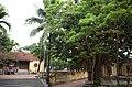 Cây cổ thụ trong sân Nghè Nhội, đường Trường Chinh, thành phố Hải Dương, tỉnh Hải Dương.jpg