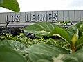 CC Los Leones Bqto.jpg