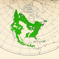 CL-01 Pinus North America range map.png