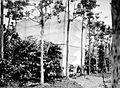 COLLECTIE TROPENMUSEUM Een aantal cacaobomen is ingekooid ter voorkoming van vreemd-bestuiving op onderneming Getas Midden-Java TMnr 10012245.jpg